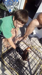 Catching crabs on the boat